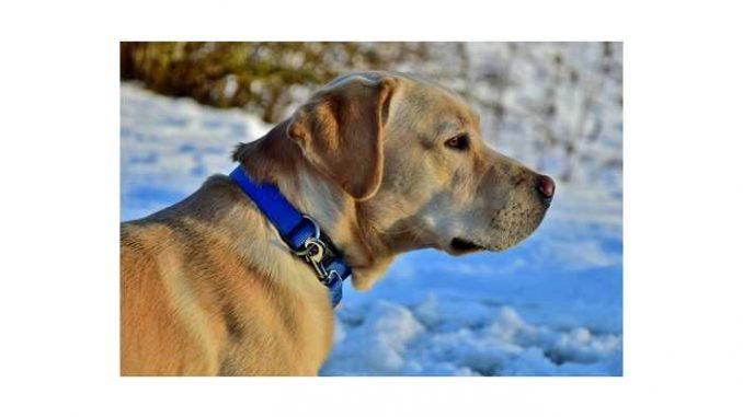 Pawbo - Acer legt Hunde ans smarte Halsband